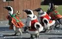 Video: Nhớ Noel khi nhìn thấy hình ảnh đáng yêu này