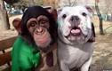 Video: Khi chó và khỉ bị xích gần nhau sẽ xảy ra chuyện này?