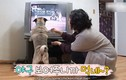 Video: Chú chó từ chối mọi bữa ăn nếu không được xem bóng chày