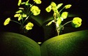 Biến cải xoong thành... đèn bàn đọc sách