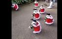 Video: Đàn chim cánh cụt ra đường đón Giáng sinh