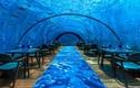Nhà hàng dưới đáy biển lớn nhất thế giới