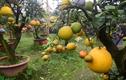 Video: Thăm vườn hơn 10 loại quả trên một cây ở Hà Nội