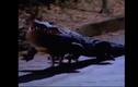 """Video: Dân tình náo loạn khi """"cá sấu chó"""" xuất hiện trên phố"""