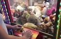 Video: Đang chơi gắp thú bông, sốc vì thấy con vật còn sống bên trong