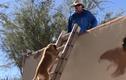 Video: Chó biết leo thang lên mái nhà