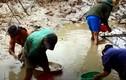 Video: Người dân lội bùn bắt cá lóc trong đợt rét kỷ lục