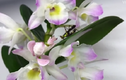 """Video: """"Bông hoa"""" vươn mình thành bọ ngựa bắt châu chấu cực nhanh"""