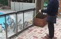 Video: Bầy chim cánh cụt quay đầu vòng tròn đồng loạt vì trò yo-yo