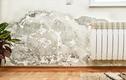 Triệt tiêu nấm mốc giúp nhà luôn khô ráo trong mùa nồm