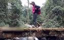 """Video: Cô giáo 9x xuyên rừng Tà Xùa """"cõng chữ"""" lên Làng Sáng"""