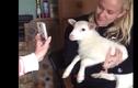 Video: Khi thú cưng còn mê công nghệ hơn cả chủ
