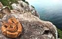 Video: Hòn đảo có 400.000 rắn nọc cực độc phá hủy cơ thể người
