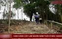 """Video: """"Đại thần mộc"""" nghìn năm tuổi ở Bắc Giang, không ai dám chặt"""