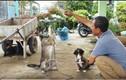 Video: Thật như đùa ở miền Tây: Chó biết lạy, xin tiền và làm toán!