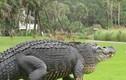 Video: Kinh hãi cá sấu khổng lồ đột nhập nhà dân