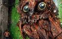 Video: Tròn mắt ngắm những con vật khổng lồ làm từ... đồng nát