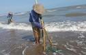 Cào cát bắt ngao: Trần gian có một thứ nghề