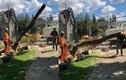 Video: Cưa cây bất cẩn, cây bất ngờ đổ đè bẹp đồng nghiệp