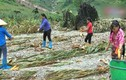 Video: Xót cảnh em bé Hà Giang đi mót từng bắp ngô sau lũ