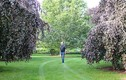 Vườn cây quý hiếm của ông lão 75 tuổi, giá 3,5 tỷ đồng mỗi cây