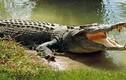 Video: 1 người bị tấn công, cả làng giết gần 300 con cá sấu để trả thù