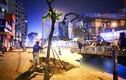 Video: Di dời hàng loạt cây xanh để mở rộng đường Phạm Ngọc Thạch