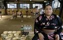 Vì sao võ sĩ sumo Nhật Bản có thể nặng đến 400kg?
