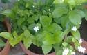 Những loại cây trồng trong nhà vừa tốt cho sức khỏe vừa thanh lọc không khí