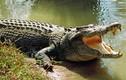Video: Ngư dân bị cả trăm con cá sấu bao vây trong đêm tối