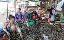 Mùa nước nổi: Chợ ăm ắp sản vật, ngồi lể ốc, mổ cá cũng có tiền