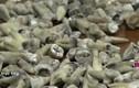 Video: Bí ẩn bức tường chứa hơn 1.000 răng người
