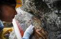 Tìm thấy bích họa nổi tiếng nữ hoàng khỏa thân 2000 năm tuổi