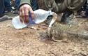 """Video: Rắn hổ mang """"thành tinh"""", đòi uống nước sau 4 ngày mắc kẹt"""