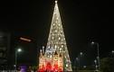 """Chiêm ngưỡng loạt cây thông Noel """"khổng lồ"""" giữa Hà Nội"""