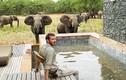 Thợ săn bị voi nặng 6 tấn lên cơn động đực giẫm chết