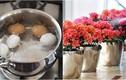 Vườn hoa ngập sắc không còn sâu bệnh chỉ với nước luộc trứng