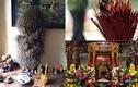 Có nên rút, tỉa chân hương trên bàn thờ tổ tiên?