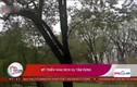 Video: Người Mỹ đi 'tắm rừng' để tăng tiếp xúc cây cối