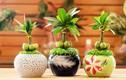 5 loại cây cảnh đặt trong phòng khách giúp gia chủ hút tài lộc