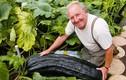 Video: Thăm vườn rau 'siêu khủng' dành cho người khổng lồ