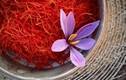 Video: Vì sao saffron là gia vị đắt nhất thế giới, hơn 10.000 USD/kg?
