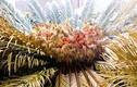 Video: Hòn đảo kỳ lạ chuyên ăn cây độc tại Nhật Bản