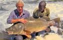 Video: Siêu cần thủ câu được cá rô nặng 45kg trên sông Nile