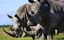 Video: Binh sĩ Ấn Độ mang AK47 bảo vệ tê giác tại vườn quốc gia Kaziranga