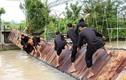 Video: Rung lắc cầu giữ thăng bằng, trò chơi hài hước hút khách du lịch