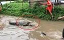 Video: Nước lũ tràn bờ, cá sấu lẻn vào khu dân cư 'trộm' chó ở Ấn Độ