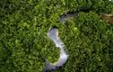 Video: Điều gì xảy ra nếu rừng Amazon biến mất?