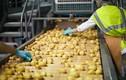 Video: Quy trình sản xuất snack khoai tây trong nhà máy lớn nhất thế giới