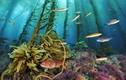 Video: Vì sao con người chưa khám phá hết đại dương?